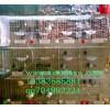 生产鸽子笼 蛋鸡笼 兔子笼 鹌鹑笼 运输笼 鹧鸪笼 狐狸貉笼 鸟笼 狗笼 猫笼 宠物笼